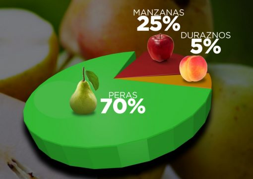 Distribución porcentual de Nuestros Productos